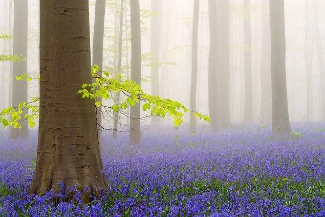 FlorestaBélgica4