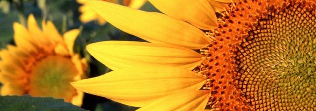 sunflower-seeds-sunflower-seeds-24670682-1600-1200