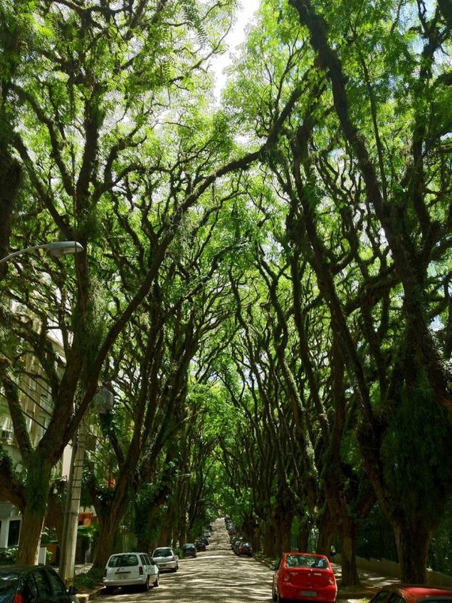 green-tunnel-street-rua-goncalo-de-carvalho-brazil-1
