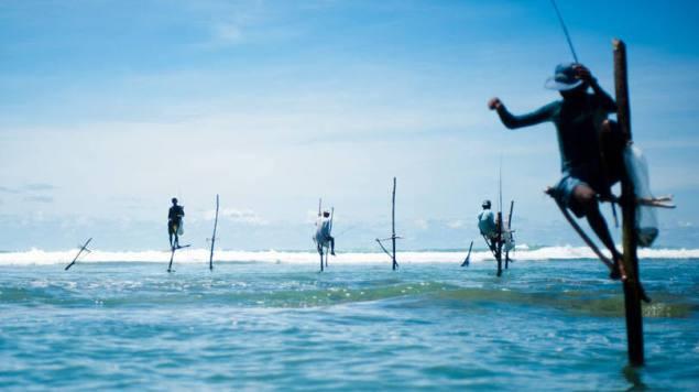 size_810_16_9_Stick_fishermen_of_Sri_Lank